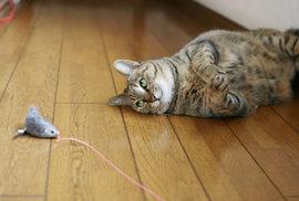 ネコがお行儀のわるい食べかたをするのはどうして??