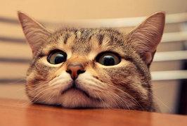 ネコがごはんに砂をかけるしぐさをするのはどうして??