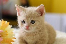 猫は室内飼いしたほうがいいの? 放し飼いにしたほうがいいの?