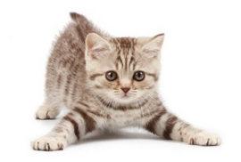 猫が前足でモミモミするのはどうして??