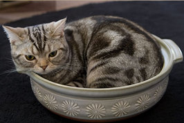 ネコが袋や狭い箱に入りたがるのはどうして??