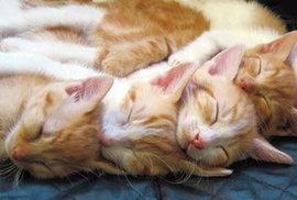 猫たちが同じ姿勢で寝ているのはどうして??