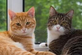 猫のオスとメスでの性格の違いは??