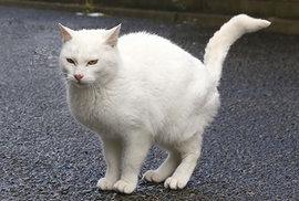 ネコが部屋中にオシッコをまき散らすのはどうして??