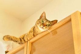 猫が高い場所に登りたがるけどどうして??