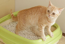 ネコがトイレを掃除した途端にオシッコをするのはどうして??
