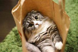 猫が袋や箱を見つけるとそこにもぐり込むのはどうして??