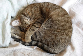 猫が丸まって眠るのはどうして??