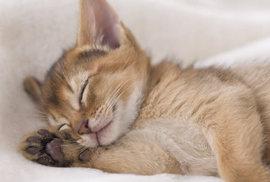 猫のネコの名前の由来はよく眠るからなの??