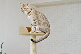 猫はしつけができないのはどうして??